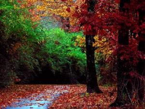Colorfull Forest - скачать обои на рабочий стол