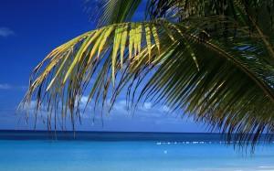 Desktop Wallpaper: Palm