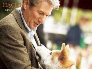 Desktop Wallpaper: Hachi: A Dog