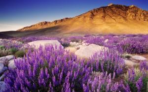 Desktop Wallpaper: Mountain Flowers