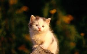 Desktop Wallpaper: Kitten