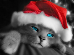 Desktop Wallpaper: Kitty with Christmas...