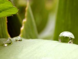 Desktop Wallpaper: Droplet on the Leaf