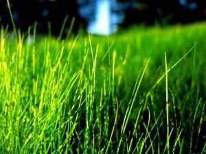 Desktop Wallpaper: Juicy Grass