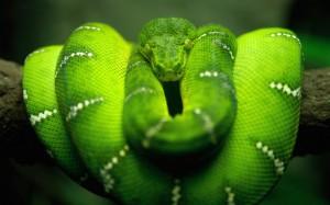 Desktop Wallpaper: Snake on the Tree