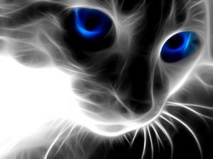 Desktop Wallpaper: Cat 3D