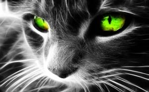 Desktop Wallpaper: Green-eyed Cat