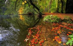 Desktop Wallpaper: Nature in the Forest