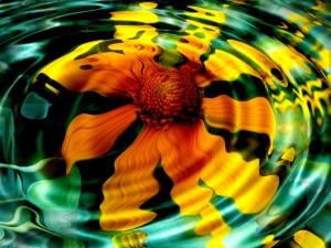 Desktop Wallpaper: Reflection of the Fl...