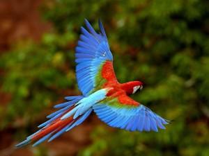 Desktop Wallpaper: Parrot