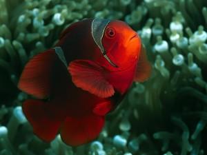 Desktop Wallpaper: Bright Fish