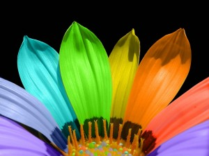 Desktop Wallpaper: Rainbow Flower