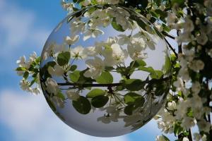 Desktop Wallpaper: Flowering