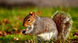 Desktop Wallpaper: Squirrel with Nut