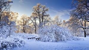Desktop Wallpaper: Winter Nature