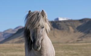Desktop Wallpaper: Pony in the Hills