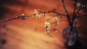 Desktop Wallpaper: Branch with Flowers
