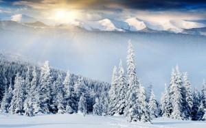 Desktop Wallpaper: Winter Forest