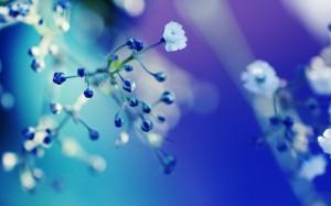 Desktop Wallpaper: Field Flowers