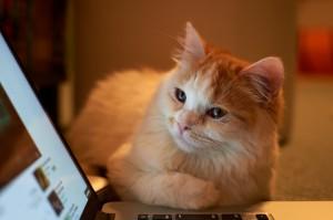 Desktop Wallpaper: Orange Cat