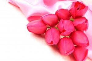 Desktop Wallpaper: Pink Petaled Flower