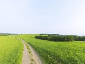 Desktop Wallpaper: Meadow Road