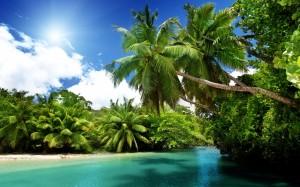 Desktop Wallpaper: Green Coconut Trees