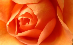 Desktop Wallpaper: Orange Flower