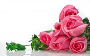 Desktop Wallpaper: Pink Rose Bud
