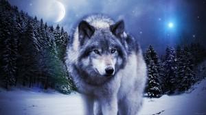 Desktop Wallpaper: White And Gray Wolf