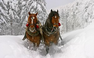 Desktop Wallpaper: Brown Adult Horse