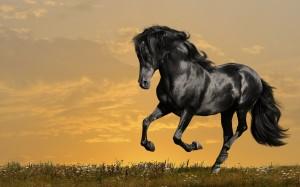Desktop Wallpaper: Black Adult Horse