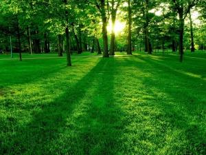 Green Park in the Morning - скачать обои на рабочий стол