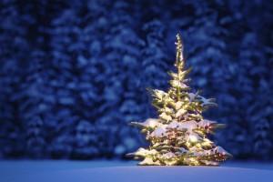 Desktop Wallpaper: Christmas Tree