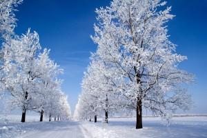 Desktop Wallpaper: Snow Capped Trees