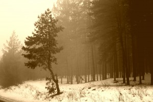 Desktop Wallpaper: Green Forest Trees