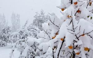 Desktop Wallpaper: White Snow