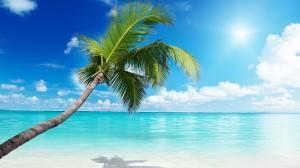 Desktop Wallpaper: Coconut Tree