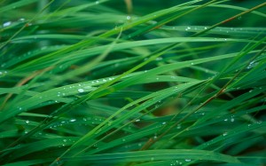 Desktop Wallpaper: Morning Dew on the G...