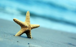 Desktop Wallpaper: Gray Starfish