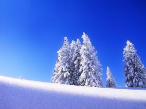 Desktop Wallpaper: Frozen Trees