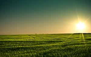 Desktop Wallpaper: Grassy Field
