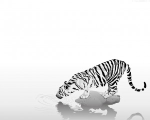 Desktop Wallpaper: Thirsty Tiger
