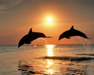 Desktop Wallpaper: Dolphin