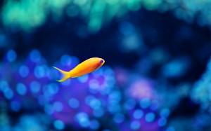 Desktop Wallpaper: Yellow Fish