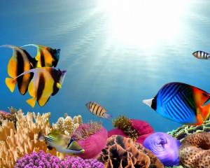 Desktop Wallpaper: Moorish Idol Fish