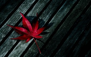 Desktop Wallpaper: Red Palmate Leaf