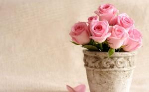Desktop Wallpaper: Pink Roses