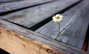 Desktop Wallpaper: White Petaled Flower...