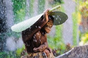 Desktop Wallpaper: Brown Small Monkey C...